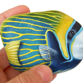 A Rare Shaped Stone Transformed in an Emperor Angel Fish! Rock Painting Art by Roberto Rizzo