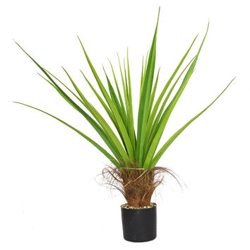 Laura Ashley Home Agave Plant with Cocoa Skin