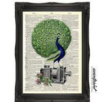 Filming Nature Peacock Collage Print on an Antique Unframed Upcycled Bookpage