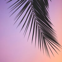 Pink palm tree photography, Los Angeles Photography, Los Angeles Palm Trees, California Photography, coral, pantone pink dogwood, boho