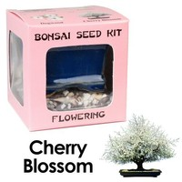 Eve's Cherry Blossom Bonsai Seed Kit, Flowering, Complete Kit to Grow Cherry Blossom Bonsai from Seed