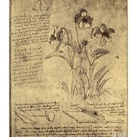 Drawing of Flowers and Diagrams by Leonardo da Vinci Giclee Print by Bettmann at Art.com