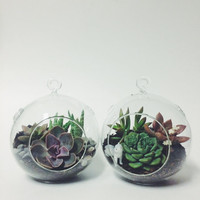 Medium Hanging Glass Terrarium Kit; Terrarium Kit; Succulent Kit; Glass Terrarium; Hanging Terrarium; Tabletop Terrarium; Home Decor; Gift