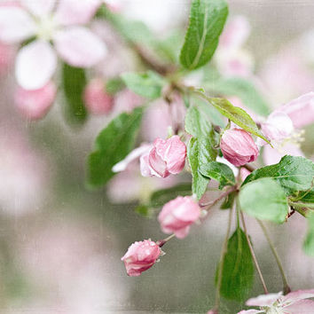Pink Shabby Chic Flower Photograph Cherry by LisaRussoPhotography