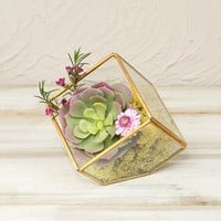 Terrarium Display Box, Industrial Geometric Cube, Clear, 5.75 in, Gold