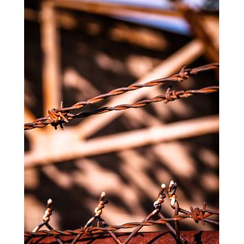 Fenced In : An Abandoned to Grace Wall Art Print