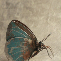 """3"""" Holly Blue Butterfly Recycled Welded Scrap Metal Sculpture, Unique Art Work, Reclaimed"""