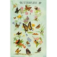 Butterflies Insect Identification Poster 21x33