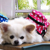 Adorable Blue Polka Dot Carrier Backpack for Dog's & Pet's Accessories-Size Large