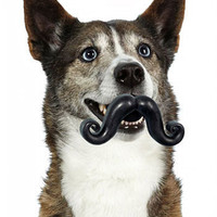 ModCloth Quirky Sit, Stay, 'Stache Pet Toy