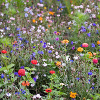 FRENCH WILDFLOWER MEADOW on we heart it / visual bookmark #25689485