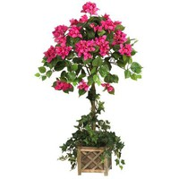 Bougainvillea Topiary w/ Wood Box