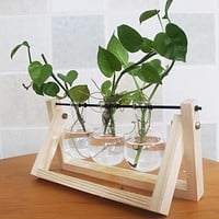 Pine Wood Glass Table Top Plant Holder
