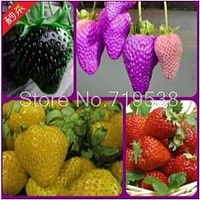 Vegetable planting balcony pot spent four seasons strawberry fruits seeds 100seeds/pack