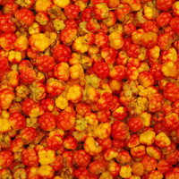 Cloudberries photo Instant Download Fine Art Photography