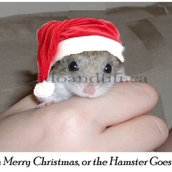 Catty Cards Christmas Cards. Merry Christmas Hamster Wearing Santa Hat. Rodent in a Hat Xmas Card. Blank Holiday Card with Mouse for Holiday