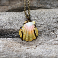 Hawaii Sunrise Necklace - Hawaiian Sunnie Jewelry - Sunrise Shell Jewelry - Sunrise Seashell Necklace - Seashell Mermaid Jewelry from Hawaii