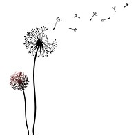 Vinyl Wall Decal Dandelion Floral Girl Room Decor Stickers Mural Unique Gift (ig3357)