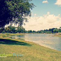 Florida Landscape Photo - photography print Lake Scenery Tranquil Trees Clear Sky Blue water nature nice weather sunny south florida