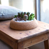 Large Cork Planter