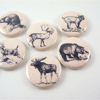 8 fridge animal magnets / Woodland Wildlife bear, moose, beaver, wolf, lynx, deer, caribou Home Living, Kitchen, Storage Organization 1102