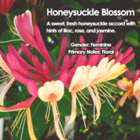 Honeysuckle Blossom Jewelry Candle Scent Sampler