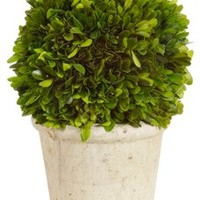 "12"" Boxwood Ball in Pot, Dried"
