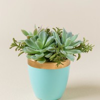 Turquoise Potted Succulent