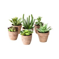 Green Thumb Succulents - Set of 6