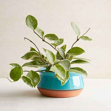 Magical Thinking Ista Planter- Turquoise One