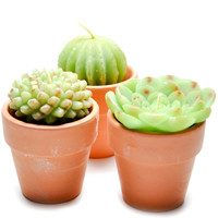 Potted Succulent Candle Set