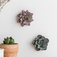 Small Succulent Wall Decor Set