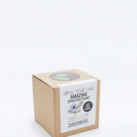 Grow Your Own Sensitive Plant Kit - Urban Outfitters