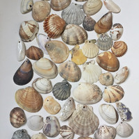 Drilled Sea Shells/ Mixed Sea Shells/ Top Drilled Shells/ Natural Shells/ Crafting Seashell / Natural Shell / Beach Finds/ Set of 50