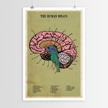 The Human Brain POSTER