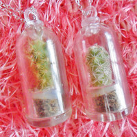 Living Cactus Succulent Wearable Plant Terrarium Pendant Necklace Jewellery Jewelry