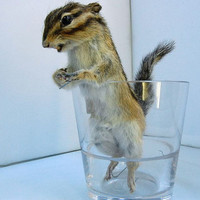 taxidermy of Eutamiassibiricus stuff animal by lovefuture on Etsy