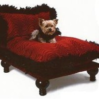 The Well Appointed House by Melissa Hawks. Celebrity Dog Bed
