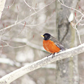 Woodland Art Print with Robin on Branch - Nature Photography Winter