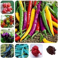 200pcs/bag Carolina Reaper, hot chili seeds Organic Vegetable Rainbow Bell Ghost Pepper seeds, Non-GMO House plants for garden