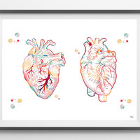 Human Heart watercolor print, medical art heart poster anterior and posterior view of the heart anatomy art surgery anatomical heart print