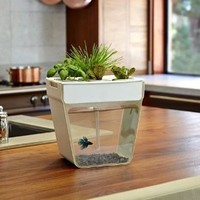 aquafarm - self-cleaning fish tank + indoor garden!