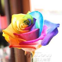 100+ Seeds Rare Holland Rainbow Rose Flower Seed To Your Lover ITEM LABEL: Rose9