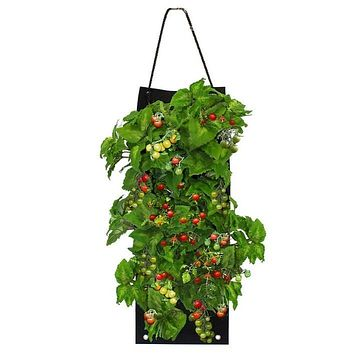 Organic Cherry Tomato Hanging Seed Bag with Soil Block