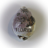 Cowries Cameo Shell featuring FLORIDA Palm Beach