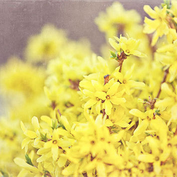 Yellow Forsythia Bush Photograph Yellow by LisaRussoFineArt
