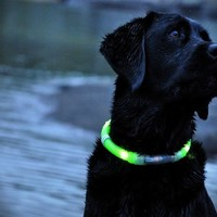Glow Doggie Collar