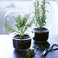 Glass Benvy Herb Container