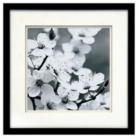 Framed Wall Poster- Blooming Branches 15x15