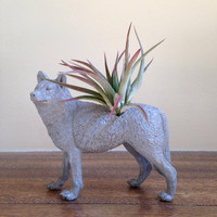 Gray Wolf Planter / Air Plant Container / Animal Planter